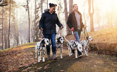 Man and woman walking in fall weather with dalmations.